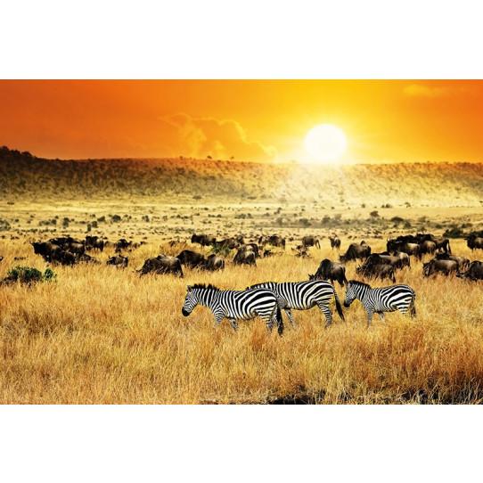 Poster - Affiche afrique zèbres