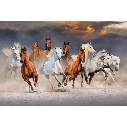 Poster - Affiche chevaux