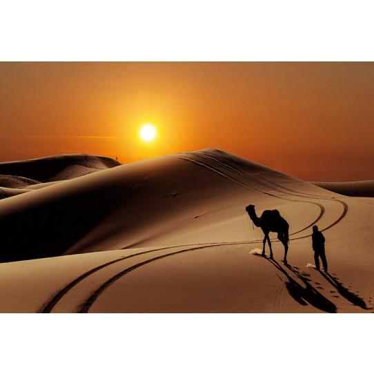 Poster - Affiche désert