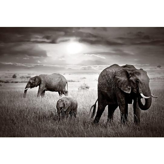 Poster - Affiche éléphants
