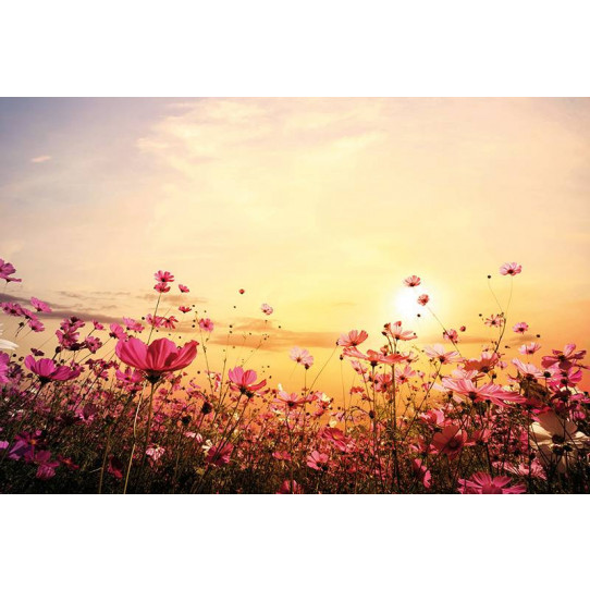 Poster - Affiche fleurs