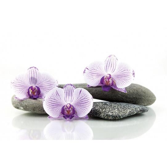 Poster - Affiche galets orchidées