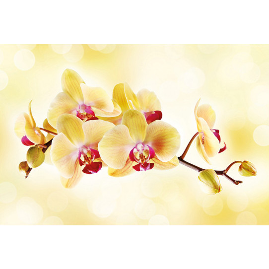 Poster - Affiche orchidée