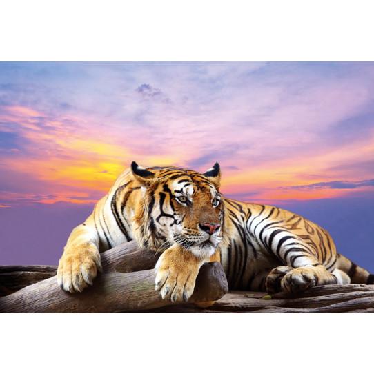 Poster - Affiche tigre
