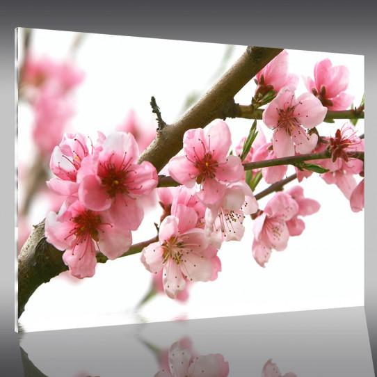 Tableau Plexi Fleurs