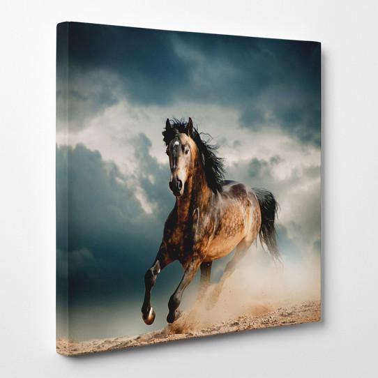 Tableau toile cheval 5 des prix 50 moins cher qu 39 en magasin - Tableau de cheval ...
