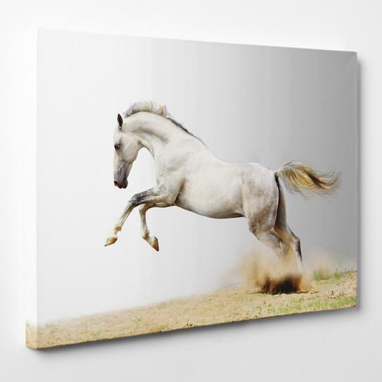 tableau toile cheval 9 des prix 50 moins cher qu 39 en magasin. Black Bedroom Furniture Sets. Home Design Ideas