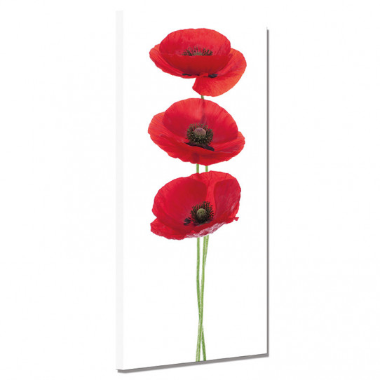 Tableau toile - Coquelicots 11