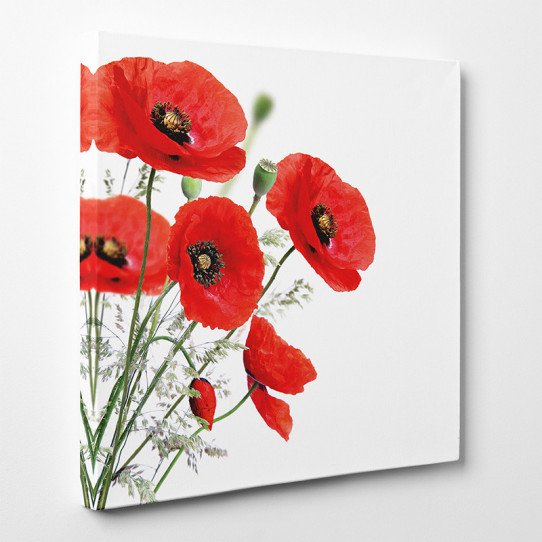 Tableau toile - Coquelicots 6
