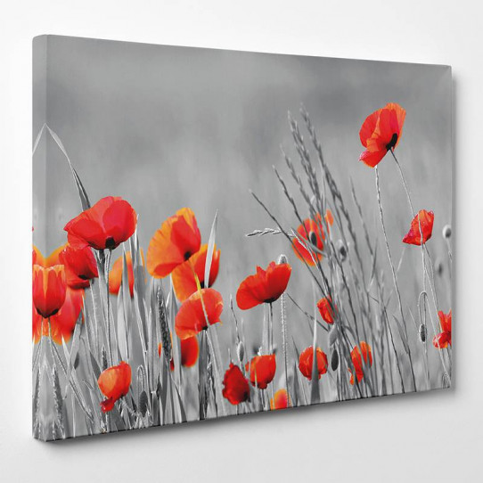 Tableau toile - Coquelicots 8