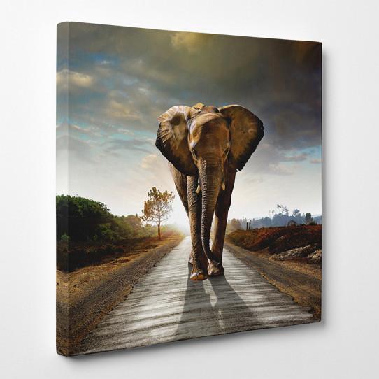 Tableau toile - Eléphant 2