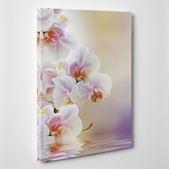 Tableau toile - Orchidées