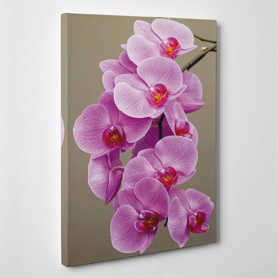Tableau toile - Orchidées 2