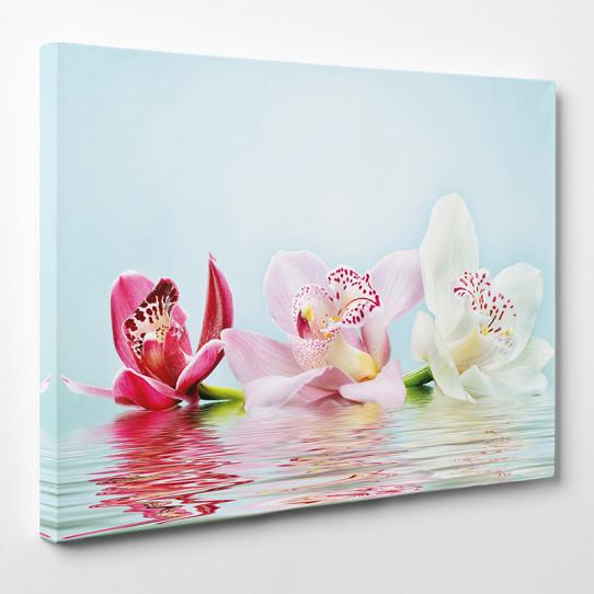 Tableau toile - Orchidées 21