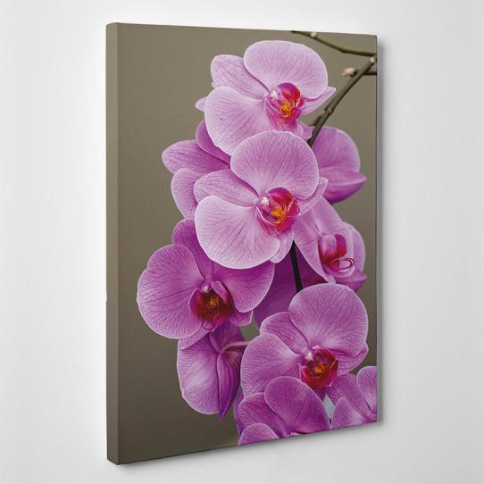 Tableau toile - Orchidées 3