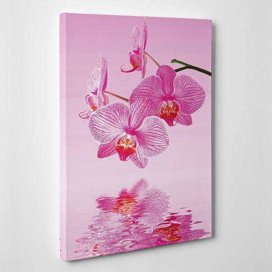 Tableau toile - Orchidées Roses