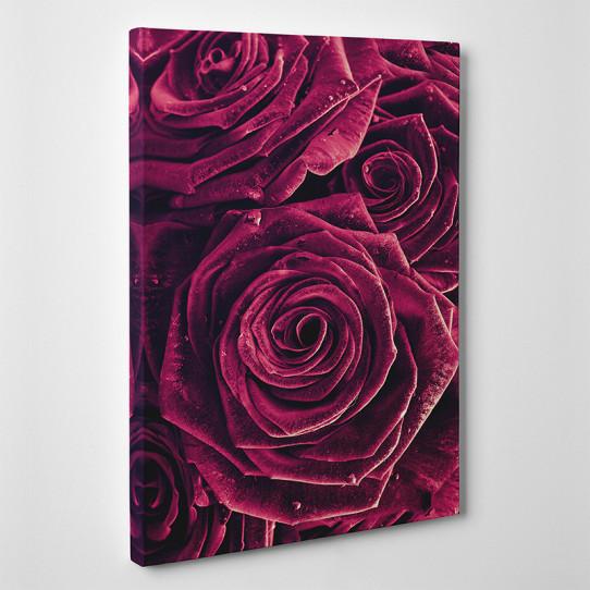 Tableau toile - Roses Zoom