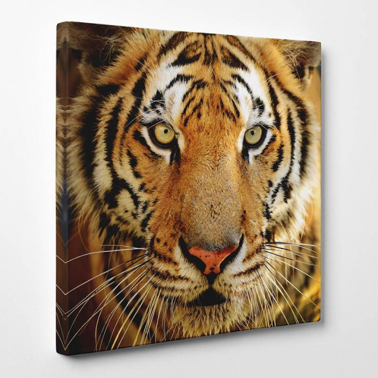 Tableau toile - Tigre 12