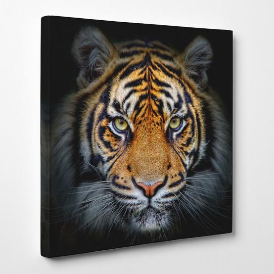 tableau toile tigre 9 des prix 50 moins cher qu 39 en magasin. Black Bedroom Furniture Sets. Home Design Ideas
