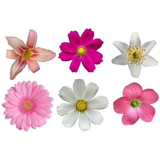 Kit 6 Stickers Fleur