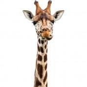 stickers autocollant wc girafe